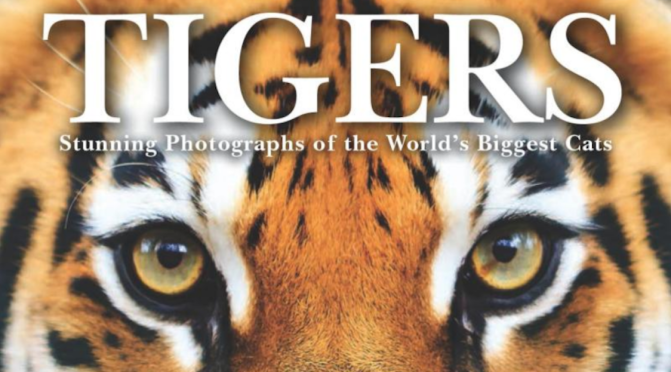 TIGERS – REVIEW
