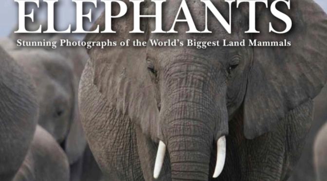ELEPHANTS – Review