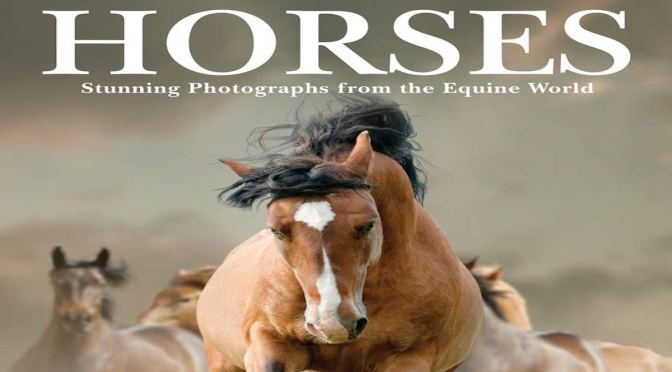 HORSES – Review