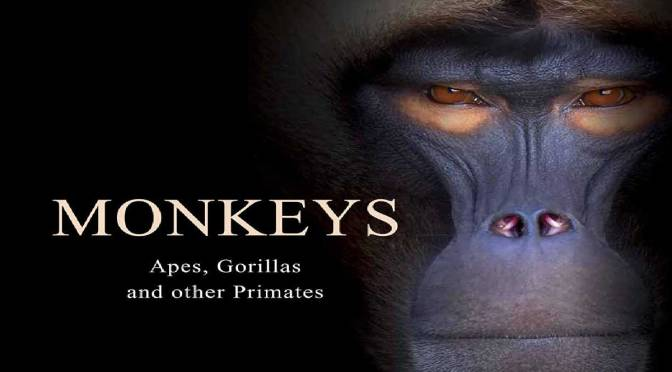 MONKEYS: Apes, Gorillas and Other Primates– REVIEW